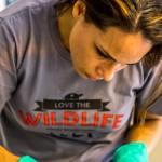 Rehabilitator at AWARE Wildlife Center